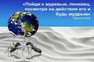 «Пойди к муравью, ленивец, посмотри на действия его, и будь мудрым» (Притчи 6:6).